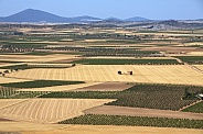 Landscape of vineyards and farmland - Spain