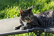 Cat on a Sun Lounger
