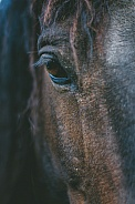 Curly Horse Eye