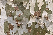 Camouflage tree bark