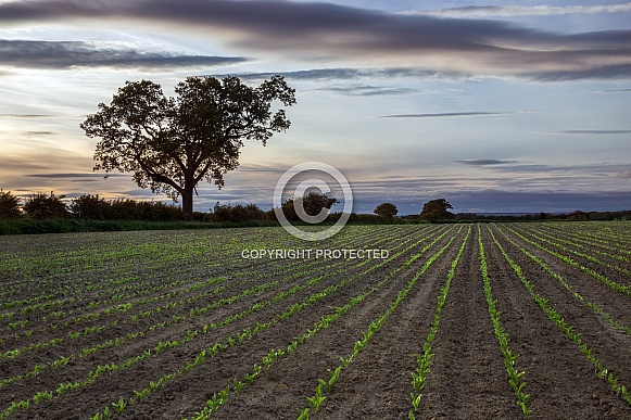 Agriculture - North Yorkshire - England