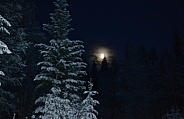 Moonlight shining on the frosty trees