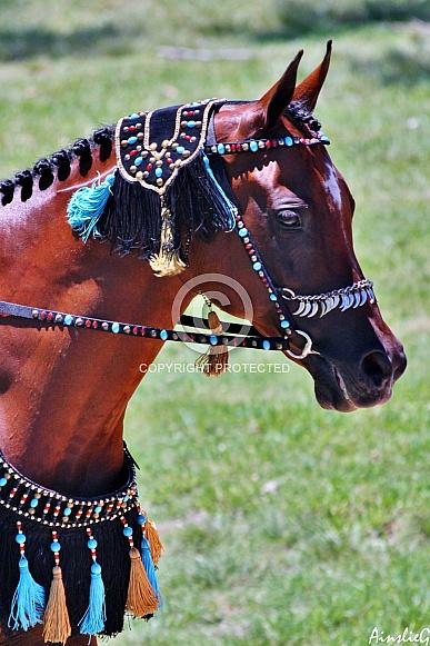 Arabian Show Costume