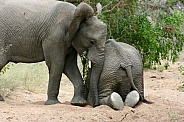 Elephants mucking about!