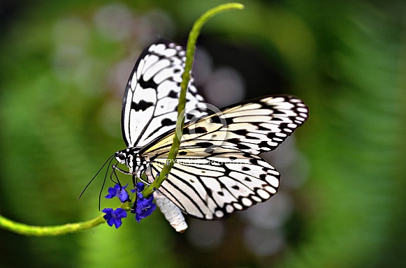 Butterfly - Paper Kite