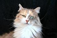 Bilo cat pose not amused