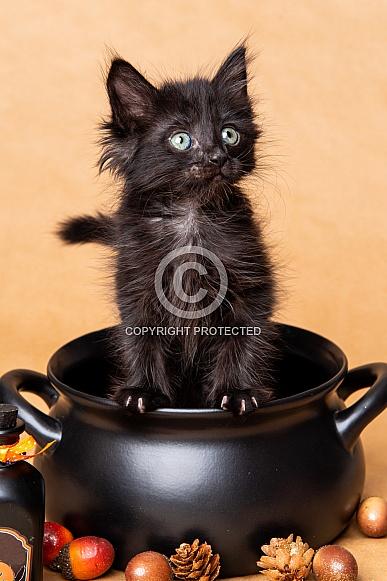 Cute kittens for Halloween