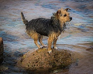 Terrier on the Rocks