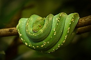 Green three python