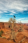 Crow on tree over scenic area in Utah