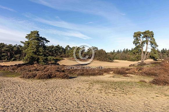 drift sand area