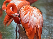 Pink Flamingo grooming
