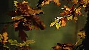 Atumn Leaves