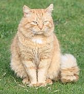 Ginger Pose
