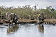 Southern Warthogs