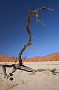 Dead Vlei - Namib Desert - Namibia
