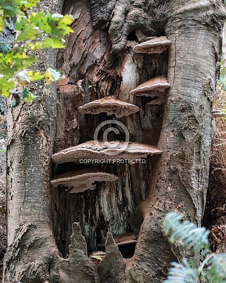 Fungi in tree trunk