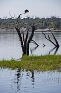 Chobe River - Chobe National Park - Botswana