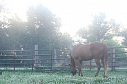 Sunrise Quarter Horse