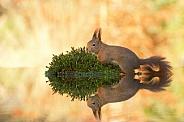 Squirrel Island