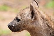 Hyena young one