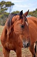 Gentle Bay Horse Portrait