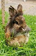 Pet Rabbit in Garden