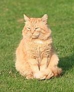 Sun lit Ginger