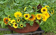 A Bouquet of Various Sunflowers