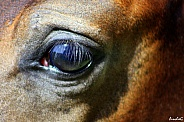 Innocent Eyes- Arabian Foal