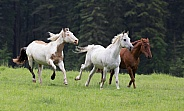 A Group of Three Horses Running