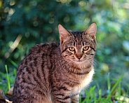 Young Shorthaired Cat