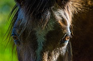 Young Horse Close Up