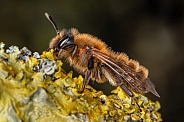 Bee resting on a tree branch