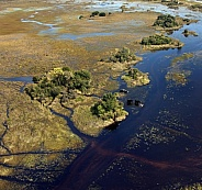 Aerial view a group of elephants - Okavango Delta - Botswana