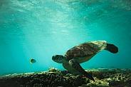 Sea Turtle and Friend