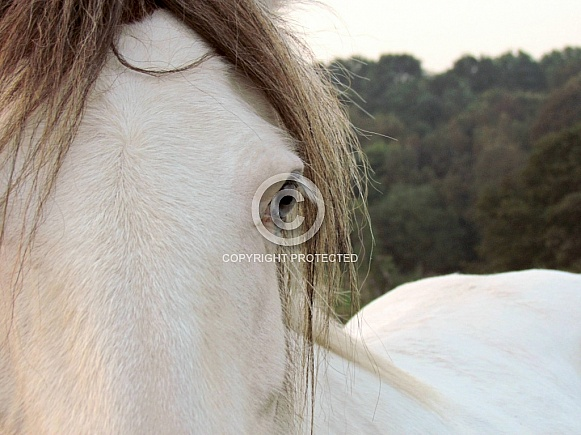 Pony close-up