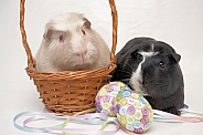 Easter Guinea Pigs