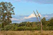 Wildlife Refuge landscape