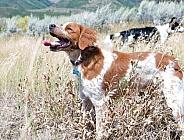 domestic dog profile