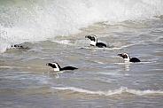 Penguins near the beach