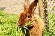Rabbit in Garden