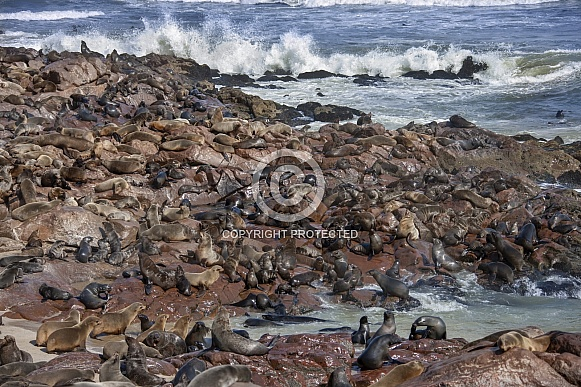 Seal Colony - Skeleton Coast - Namibia