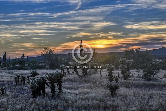 Setting sun in the Arizona desert