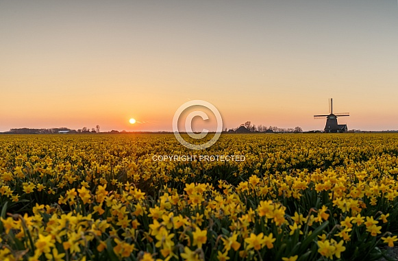 Sunset and a Windmill
