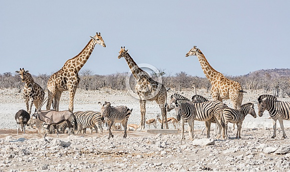 Busy Watering Hole