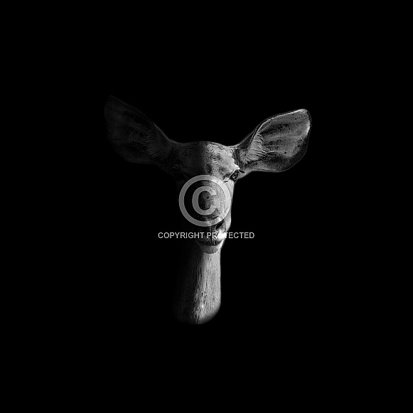 Female Kudu Monochrome Portrait