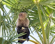 Macaque monkey sitting high in a tree