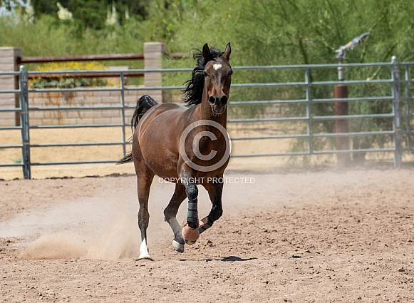 Horse running around a ring