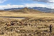 The altiplano in Puno Province - Peru